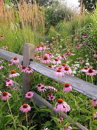 wild flowers in wild meadows plant wildflowers in your garden and keep them tidy and organized