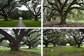 visiting oak alley plantation near new orleans u2013 red shoes red wine