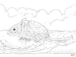 common house mouse coloring page free printable coloring pages