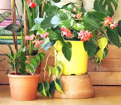 houseplants that need little light 18 most beautiful indoor plants 5 easy care tips a piece of