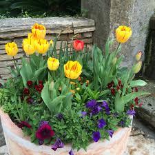 spring break in san antonio