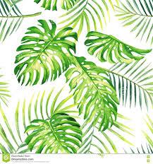 Tropical Plants Images - exceptional tropic plants part 1 hand drawn watercolor tropical