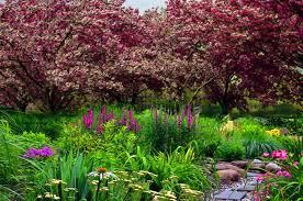 flowers garden nice water lovely flowers spring nature stream