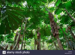 daintree rainforest stock photos u0026 daintree rainforest stock
