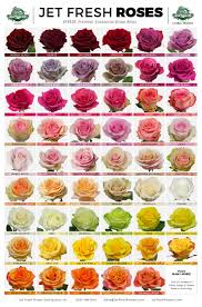 wholesale roses jet fresh flowers wholesale roses variety sheet these varieties