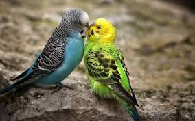 bird free hd top most downloaded wallpapers page 22