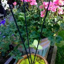 amazon com all natural mosquito repellent incense sticks double