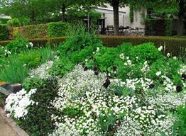 29 best gardens white flowers images on pinterest white flowers