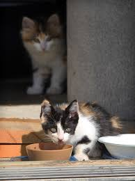 elaborate kitten rescue in kingsville windsor star