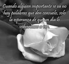 imagenes de luto para el facebook bonitas imágenes de rosas blancas de luto con frases
