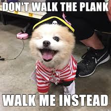 Pirate Meme - can pirate dog please be a meme meme guy
