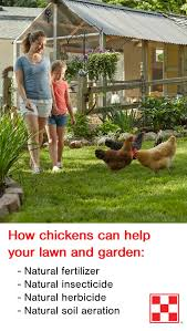 Lawn Free Backyard 4 Ways Backyard Chickens Help Gardens Countryside Network