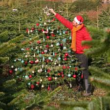 b q tree deal real nordman fir on sale for just 15