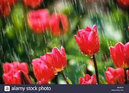 flower gardens holland the netherlands lisse flower gardens called de