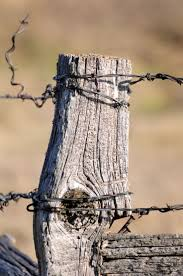 260 best barb wire images on pinterest country life fence posts