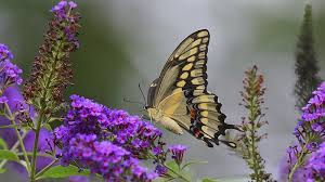 bring home the butterflies with the agfc sports