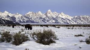 Wyoming wildlife tours images Winter tours snowcoach jackson hole wy central reservations jpg