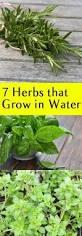 Indoor Herbal Garden 7 Herbs That Grow In Water Outdoor Living Plants And Herbs