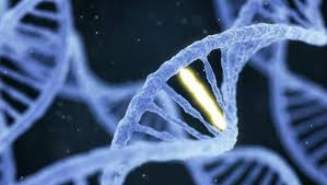 Sho Bmks dna data banks to be set up at national state level to store