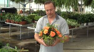 Putting Roses In A Vase How To Arrange A Dozen Roses In A Bubble Bowl Youtube