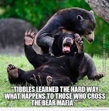 Sad Bear Meme - learning the hard way very funny pics