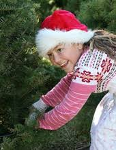 find christmas trees in springfield oregon pnw christmas tree