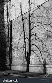 shadow tree on wall brick stock photo 765467728
