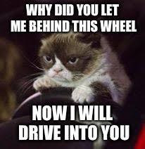 Grumy Cat Memes - grumpy cat memes album on imgur
