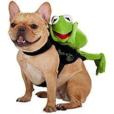 Halloween Dog Costume Amazon Disney Kermit Rider Halloween Dog Costume Xl Pet