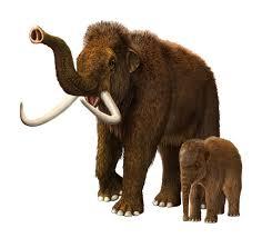 tale of the woolly mammoth pitara kids network