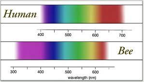 Blue Light Wavelength Animal Causes Of Color