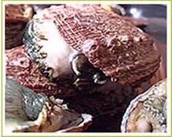 cuisiner des ormeaux recette les ormeaux à la poêle