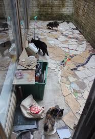 mosaic catio cat patio project hometalk