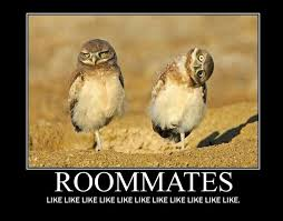 Roommate Memes - funny quotes about college roommates funny quotes pinterest