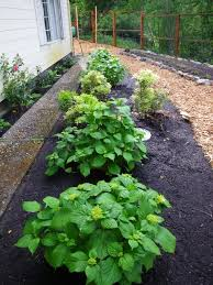 landscape design parameters edible landscaping made easy with