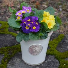 buy kew gardens pots u0026 planters kinsman garden