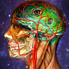The Anatomy Of The Human Brain How To Make Friends With Your Reptilian Brain