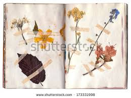 Drying Flowers In Books - old dry flowers open book herbarium stock photo 173331998