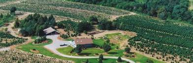 fontaine tree farms choose and cut wholesale christmas trees