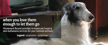 pet euthanasia at home in home euthanasia pet euthanasia pet