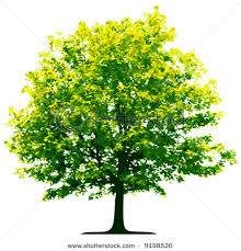 stock photo of a green tree with yellow blooms vector clipart