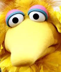 big bird is richer than romney