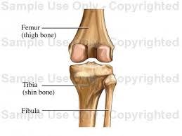 Knee Bony Anatomy Posterior Knee Bones Medical Illustration Human Anatomy Drawing