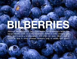 bilberries to the rescue superfoods with superpowers shakeology