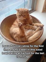 Cats In Small Spaces Video - best 25 funny cat memes ideas on pinterest funny cat quotes