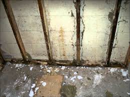 mold in basement cold rooms youtube