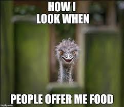 Ostrich Meme - louring ostrich memes imgflip