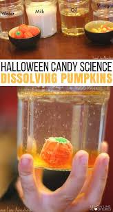 dissolving candy pumpkins super fun halloween science for kids