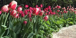 Spring Flower Garden Apothecaries U0027 Garden 17th Spring Flower Festival Events Moscow