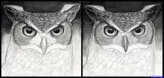 10 how to draw a great horned owl